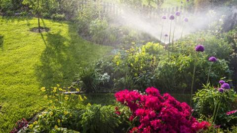 Tu jardín en buenas manos con tu nuevo programador de riego ferrOkey