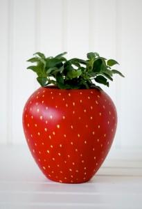 macetas DIY + Regalo frutal
