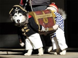 10-disfraces-de-carnaval-para-mascotas-diy-hazlo-tu-mismo-10