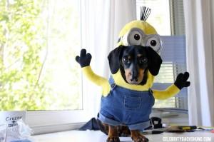 10-disfraces-de-carnaval-para-mascotas-diy-hazlo-tu-mismo-12