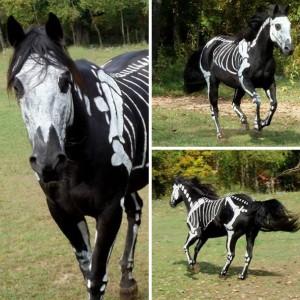 10-disfraces-de-carnaval-para-mascotas-diy-hazlo-tu-mismo-7