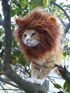 10-disfraces-de-carnaval-para-mascotas-diy-hazlo-tu-mismo-8