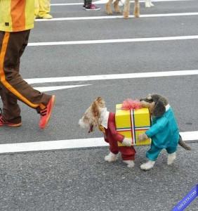 10-disfraces-de-carnaval-para-mascotas-diy-hazlo-tu-mismo-9