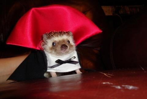 +10 Disfraces de Carnaval para mascotas DIY-Hazlo tú mismo