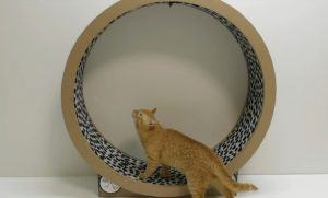 Rueda de cartón gigante para gatos DIY