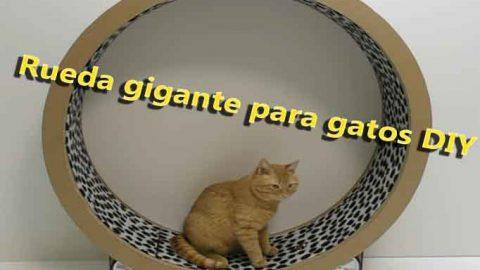 Rueda de cartón gigante para gatos DIY-Hazlo tú mismo