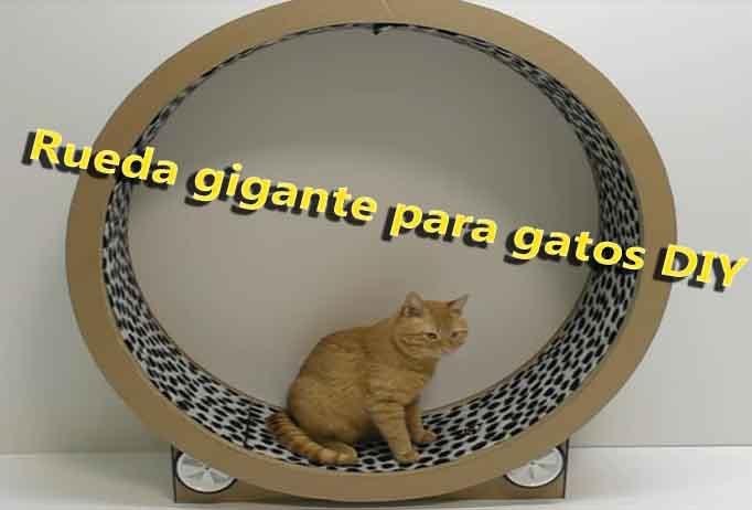 Rueda de cartón gigante para gatos
